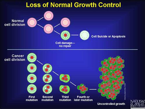 Crestere necontrolata celule