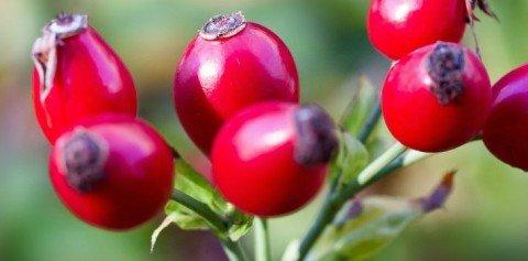 Vitamina C naturala, unul din cei mai puternici antioxidanti