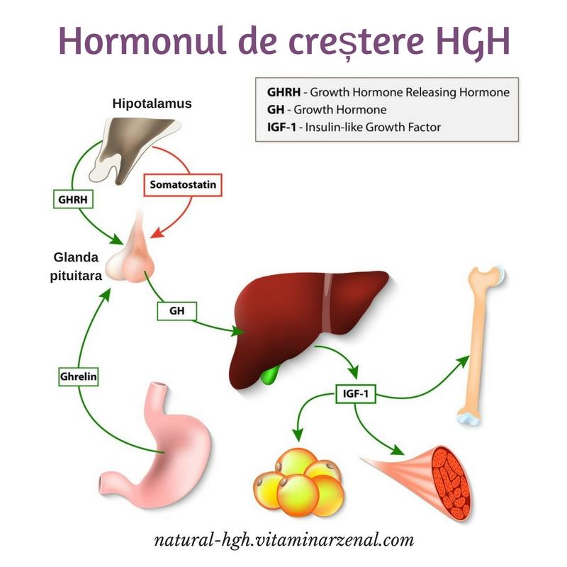 ce este hormonul de crestere hgh - Ce este hormonul de creștere uman și cum acționează în organism?